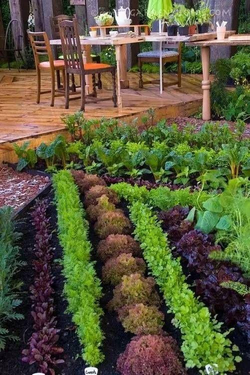 菜园美成了花园,长见识了!【设计联·1276期】