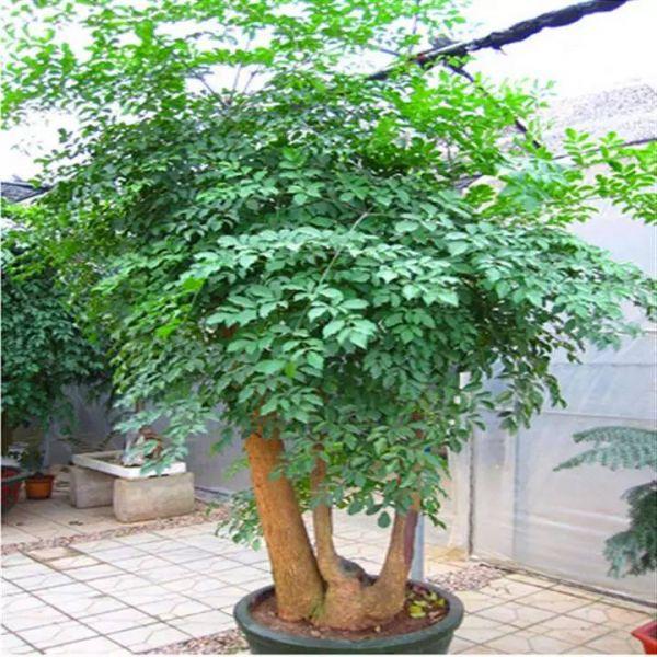 客厅放什么植物风水好 客厅植物摆放风水