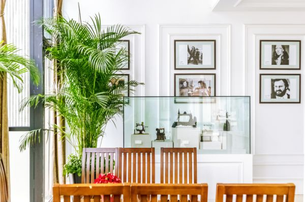 客厅放什么植物好?推荐这7种,尤其第5种增加福气人见人爱